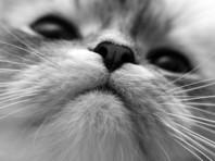 """В самарском СУ СК РФ озабочены """"откровенной травлей детей"""" за публикацию ролика с убийством котенка"""