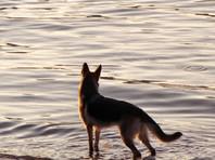 В Бурятии собака принесла в село ногу, принадлежащую пропавшему фермеру-убийце