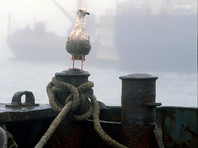 На Балтфлоте открестились от двух ракетных катеров, угнанных из бухты Балтийска