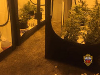 По предварительным данным, подозреваемый выращивал коноплю в теплицах, оборудованных в собственном гараже