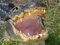 В Мексике предполагаемого насильника избили и бросили в вольер с крокодилами