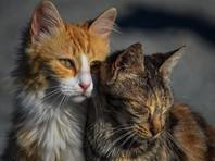 """В Благовещенске расследуют то ли массовое убийство, то ли массовое похищение 11 котов-артистов из шоу-театра """"Котовасия"""""""