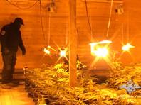 Плавучую плантацию конопли обнаружили в Архангельской области (ФОТО, ВИДЕО)