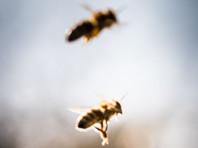 На стадионе в Аризоне бейсболистов атаковал рой диких пчел