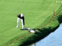 Американский гольфист во время матча прогнал с поля аллигатора (ВИДЕО)