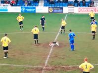 В Англии футбольный матч прервали на шесть минут из-за собаки, бегавшей по полю (ВИДЕО)