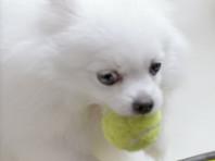 В Бразилии организаторы теннисного турнира привлекли к соревновательному процессу собак