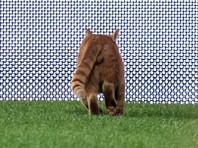 """УЕФА хочет наказать турецкий """"Бешикташ"""" из-за выбежавшего на поле кота"""