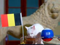 Кот из Эрмитажа предсказал Бельгии победу в матче за третье место ЧМ-2018