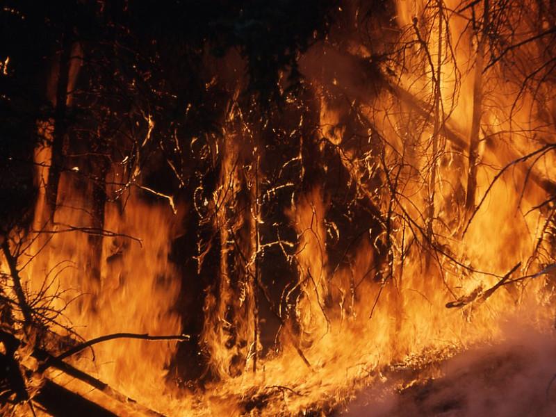 Стыдно потратить 75 млрд на Универсиаду и не тушить пожары в Сибири