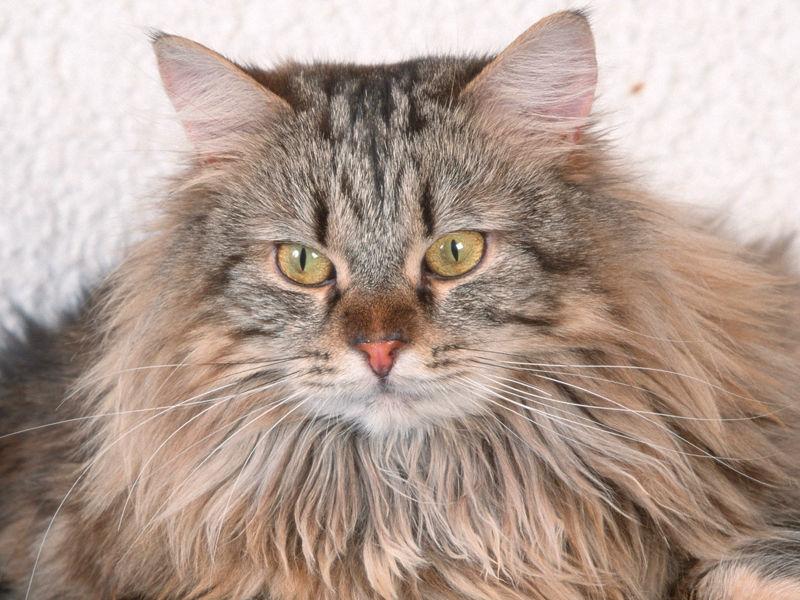 """Компания """"Пролайн-Медиа"""" представила на очной защите кинопроектов, претендующих на господдержку, проект будущего мультфильма """"Коты"""", главным героем которого должен стать кот Питер - звезда интернета"""