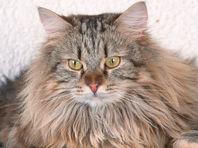 Мультфильм про кота Питера - звезду интернета - претендует на госфинансирование