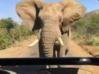 Арнольд Шварценеггер опубликовал документальные кадры своего бегства от слона (ВИДЕО)