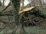 """Древний бук рухнул на дорогу в Северной Ирландии, ведущую в сериале """"Игра престолов"""" в Королевские земли"""