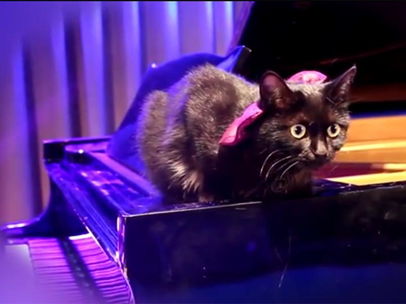 Дом офицеров Забайкальского края поздравил любителей животных с Международным днем кошек, который отмечается 8 августа