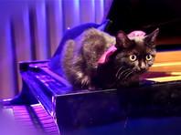 Читинский Дом офицеров выпустил клип с трехминутным мяуканьем на музыку Россини (ВИДЕО)