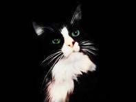 Пермский театр разыскивает кота-актера, пропавшего в Москве после приезда на гастроли