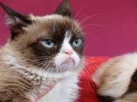 """Вояж """"Сердитого кота"""": поучаствовал в мюзикле на Бродвее и снова был увековечен в воске"""