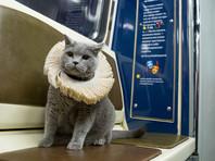Чистокровный британский кот стал первым пассажиром шекспировского поезда московского метро