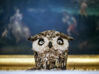 Директор Эрмитажа Пиотровский о травле выставки Яна Фабра: это делают липовые защитники животных, которые в музее не были