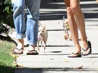 Джонни Деппу грозят новые обвинения из-за собак бывшей жены