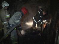 Четыре кота пострадали на своем посту во время пожара в Эрмитаже, пятого спас кислородный аппарат пожарных
