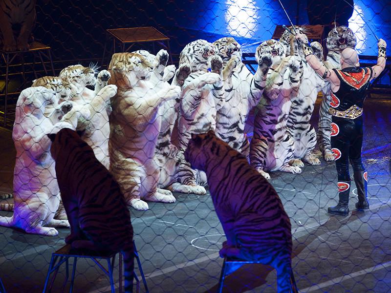Швейцарские Ассоциации защиты животных представили в Федеральный совет, который выполняет функцию главы государства, петицию о запрете использования в цирках Конфедерации диких животных
