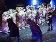Цирки Швейцарии могут остаться без тигров, слонов, медведей и других диких зверей из-за петиции защитников животных