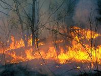 """В Забайкалье горел священный для буддистов национальный парк """"Алханай"""""""