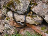 Буддистка из Китая решила исправить карму при помощи змей