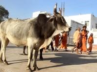 В Индии может появиться министерство коров