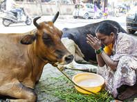 Защитники священных коров в Индии заставили перевозчиков говядины съесть навоз