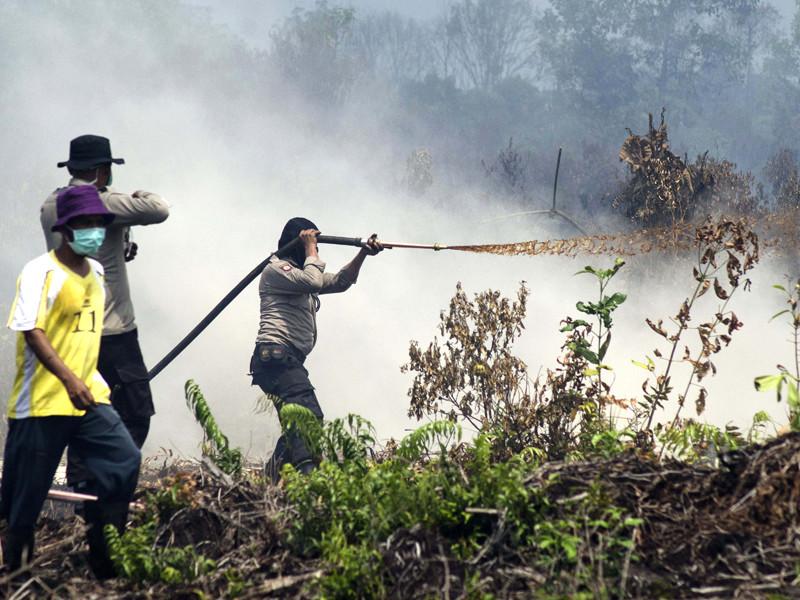 В Индонезии издали фетву, запрещающую фермерам сжигать леса
