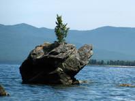 Буряты скорбят о срубленной неизвестными березе, которая росла на вершине священной скалы Черепаха на Байкале близ села Турка
