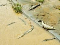 СМИ сообщили о ходившем по воде пасторе из Зимбабве, которого сожрали крокодилы. Новость оказалась выдумкой