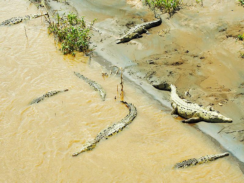 В Зимбабве ходившего по воде пастора сожрали крокодилы, оставив только нижнее белье и сандалии