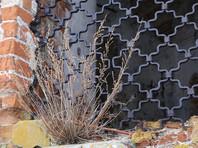 Съемки в неглиже в заброшенном храме в Татарстане заинтересовали Следственный комитет (ФОТО)