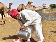 Казахстанским паломникам, собирающимся на хадж в Мекку, советуют держаться подальше от верблюдов и их молока
