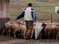 Мусульмане в Чечне возмутились ростом цен на жертвенный скот в канун Курбан-байрама