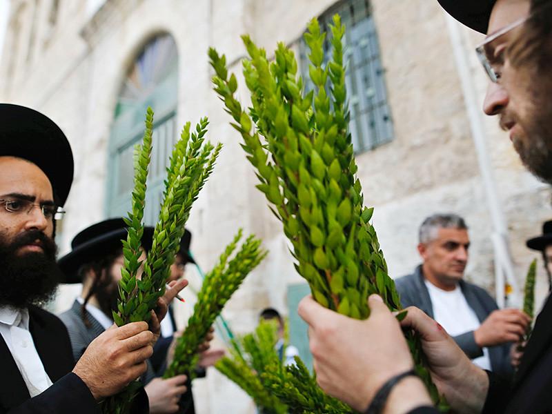 Иудеи готовятся отметить недельный праздник Суккот в память о скитаниях по пустыне