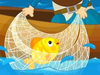 "Андрей Никулин: ""Мы регулярно ловим золотую рыбку"""