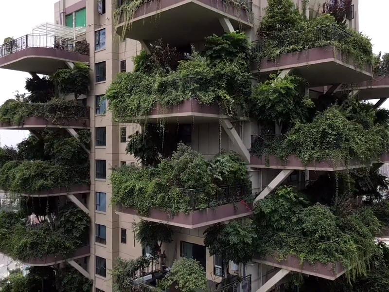 """Проект """"зеленого"""" жилого комплекса в Чэнду провалился из-за поселившихся в нем москитов"""