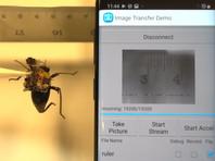 Американские инженеры собрали миниатюрную носимую камеру для жуков (ВИДЕО)