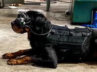 Армия США тестирует очки дополненной реальности для собак
