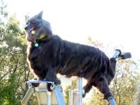 Жутковатые роботы-волки защитили жителей японского города от нападений медведей (ВИДЕО)