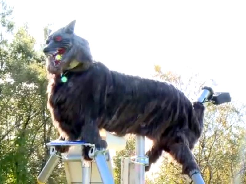 Жутковатые роботы-волки защитили жителей японского города от нападений медведей
