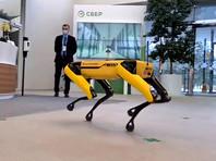 """Сбер"" купил робота Spot (ВИДЕО)"