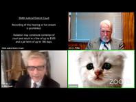 В США адвокат принял участие в заседании суда через Zoom с фильтром грустного котенка (ВИДЕО)