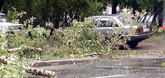 В Москве и Подмосковье ураган стал причиной гибели 7 человек