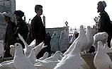 Для кандагарских гомосексуалистов голуби  машут одним крылом